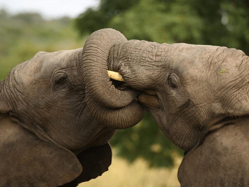 Africa House - On Safari