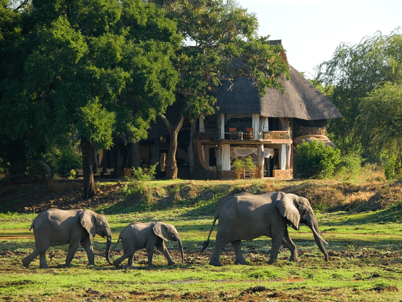 Luangwa Safari House - Elephants