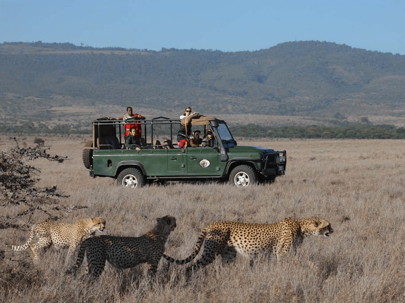 Sirikoi House - Safari