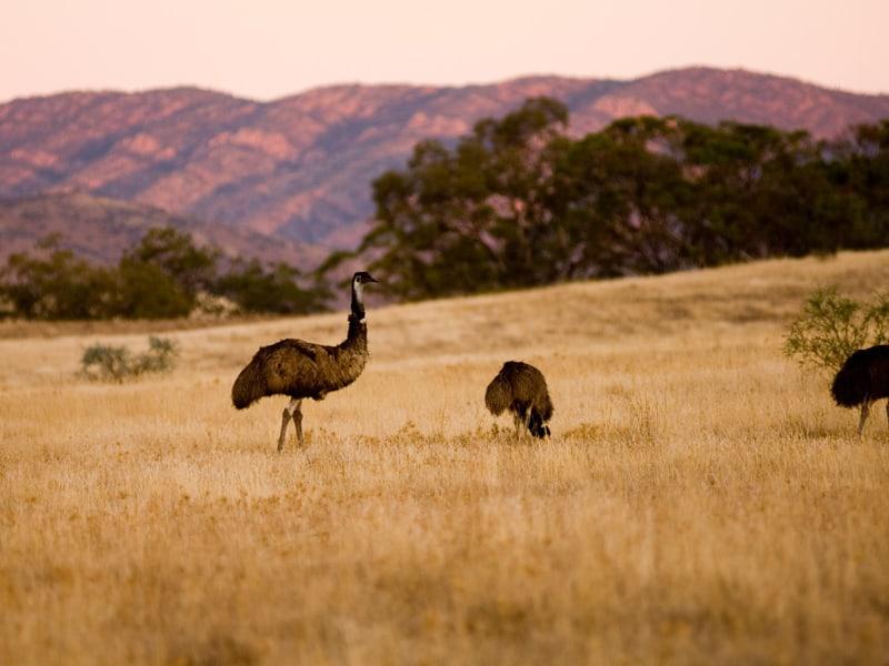 Sydney, The Outback And Melbourne - Flinders Ranges