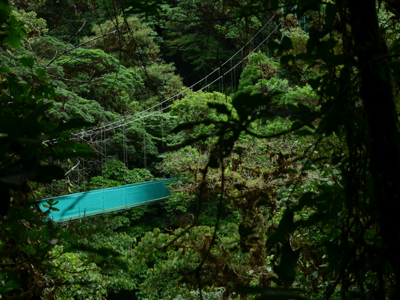 Costa Rica - Canopy Tours