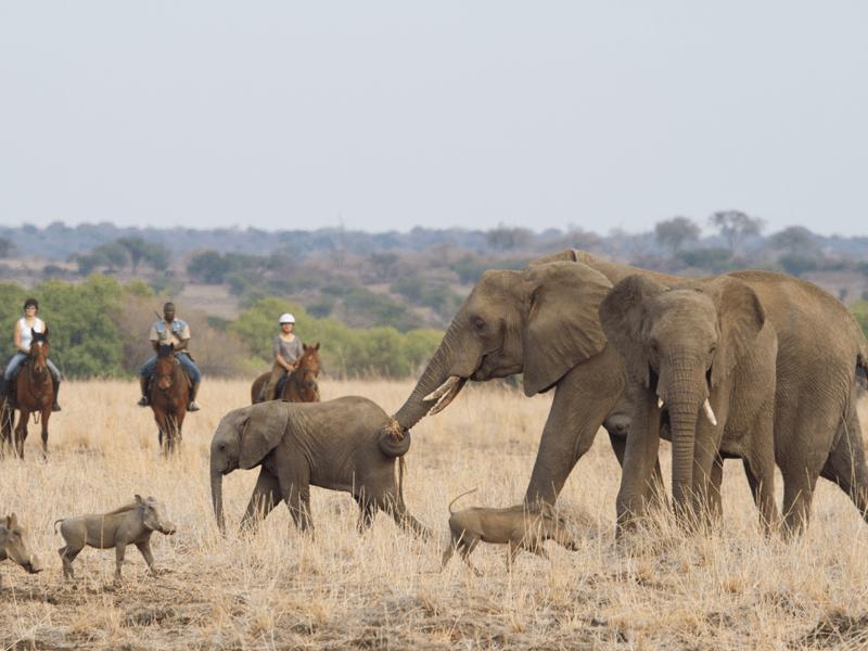 Bush And Lodge Horse Safari