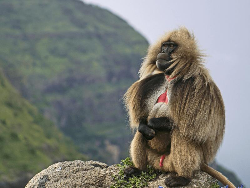 Historical Tour - Ethiopia - Simien Mountains