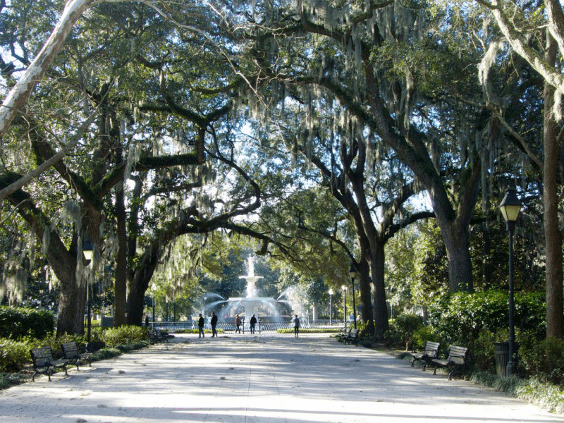 South Carolina And Georgia - Forsyth Park