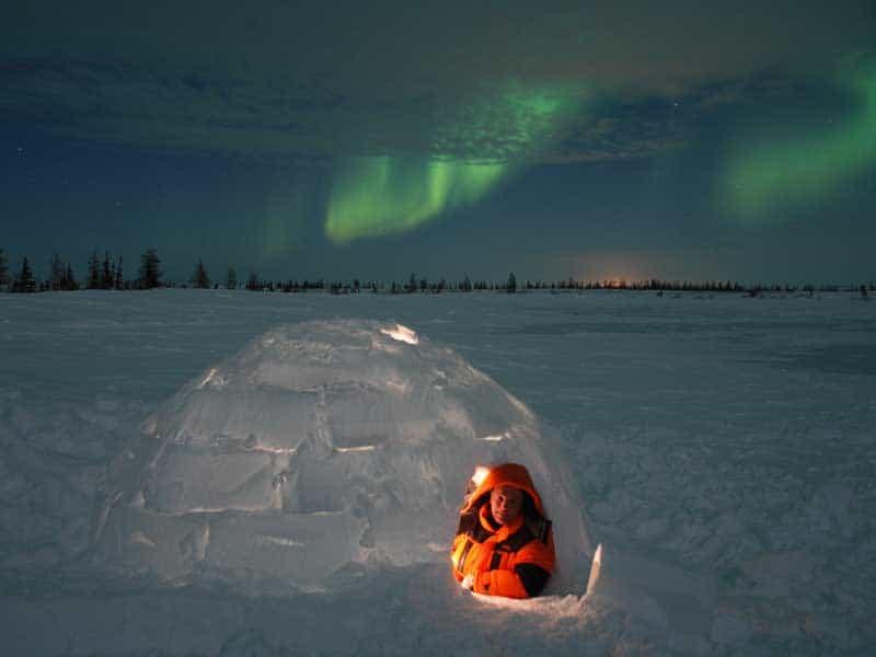 Canada - Polar Bears - Igloo