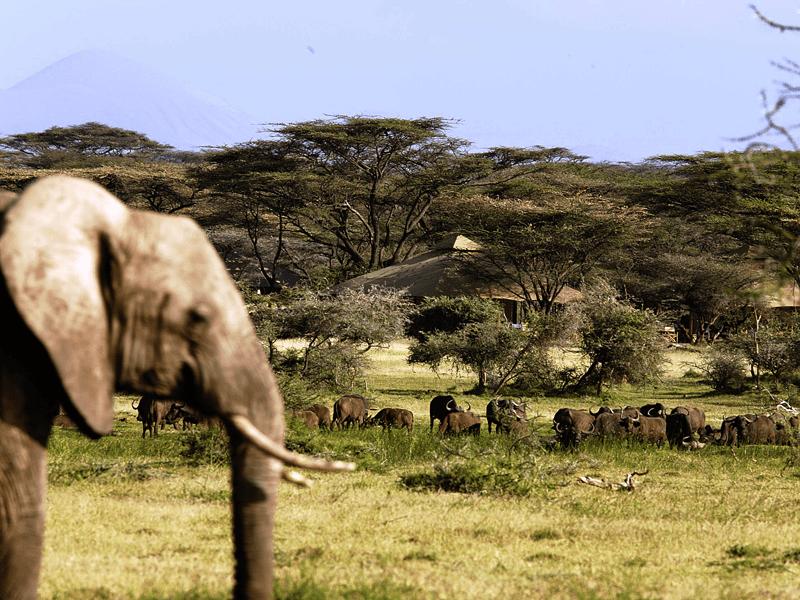 Born Free Safari - Joy's Camp