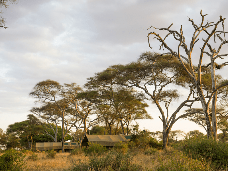 Tarangire - Tanzania