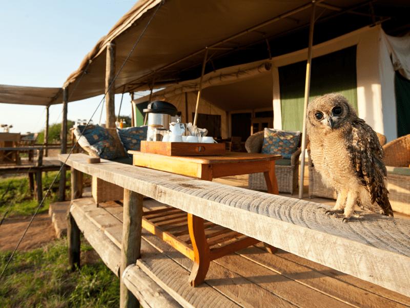 African Safari - Laikipia