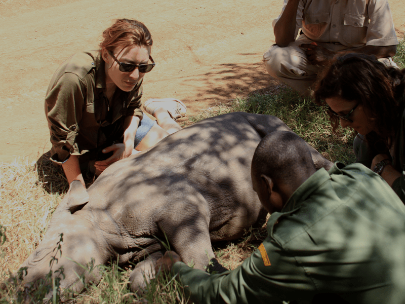 African Safari - Lewa Conservation
