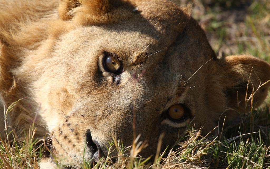 Botswana and Zambia Safari