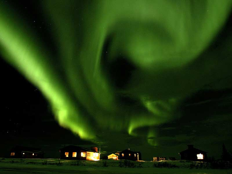 Canada - Polar Bears - Northern Lights