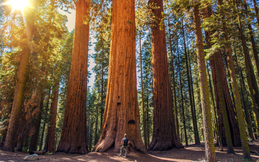 USA - Redwoods