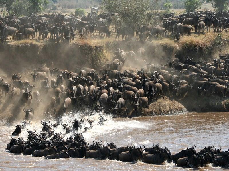Serengeti - Wildebeest