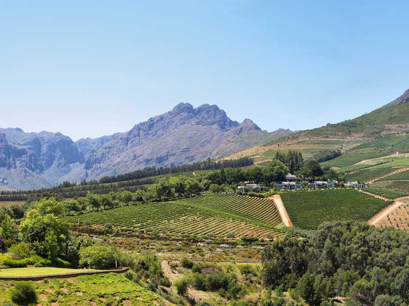 South Africa - Cape Town - Wine Region