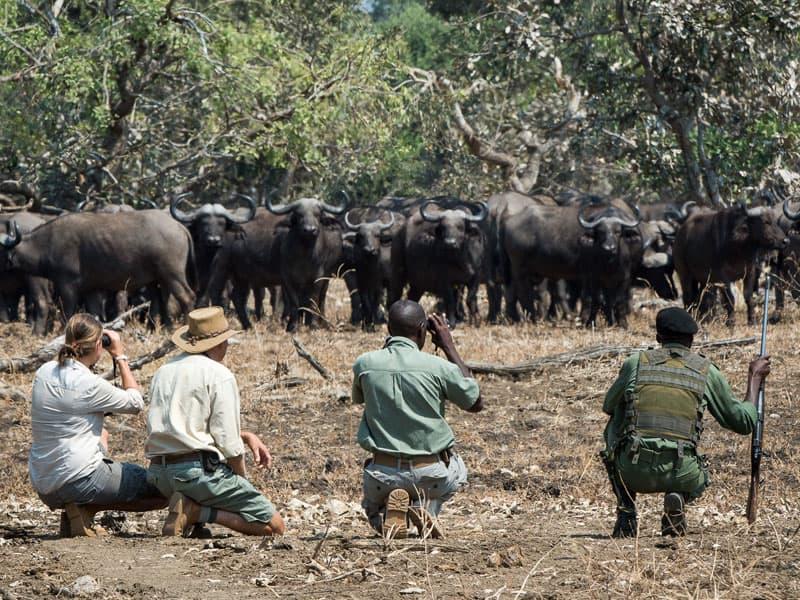 Zambian Safari - Zambia