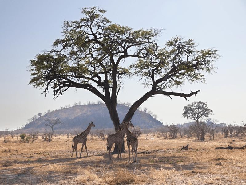 Tarantine National Park - Tanzania