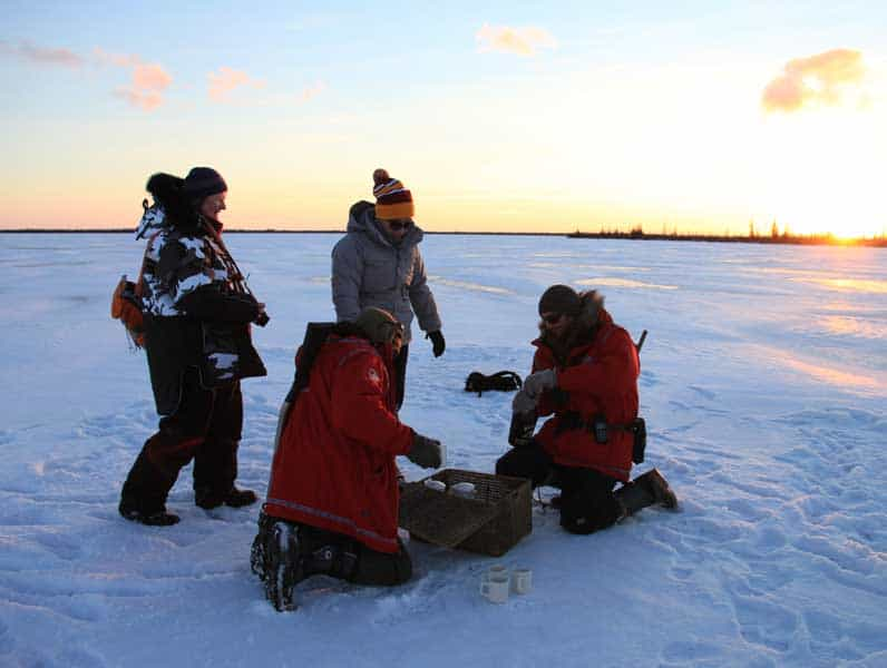 Canada - Polar Bears - Tea Break