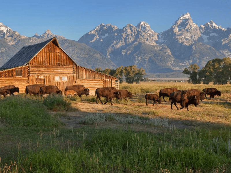 Grand Teton And Yellowstone - Yellowstone - Teton Ranges