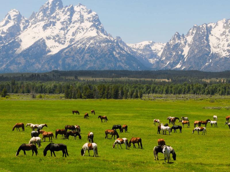 Yellowstone - Teton