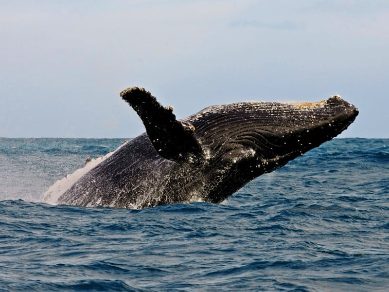 Cape Town - Whale Watching