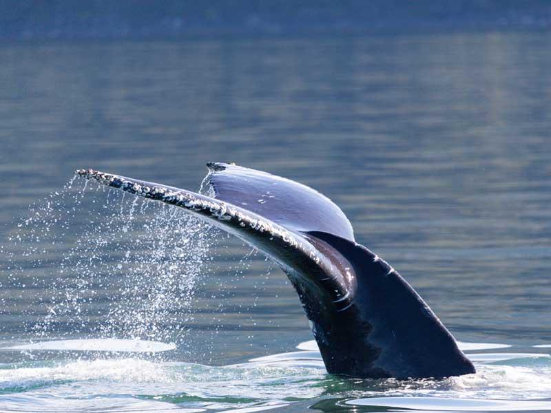 USA - Whale Sighting