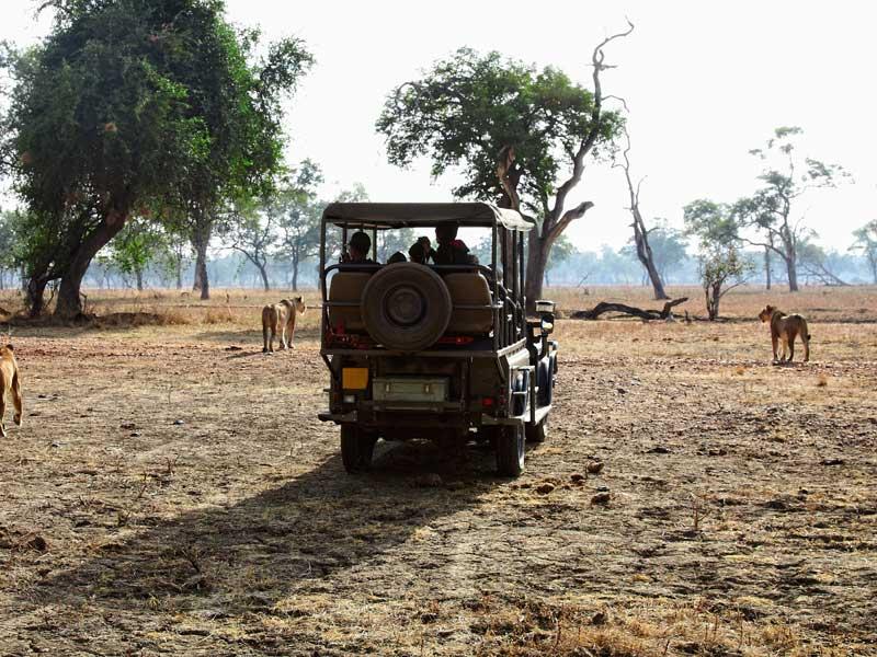 Zambia - On Safari