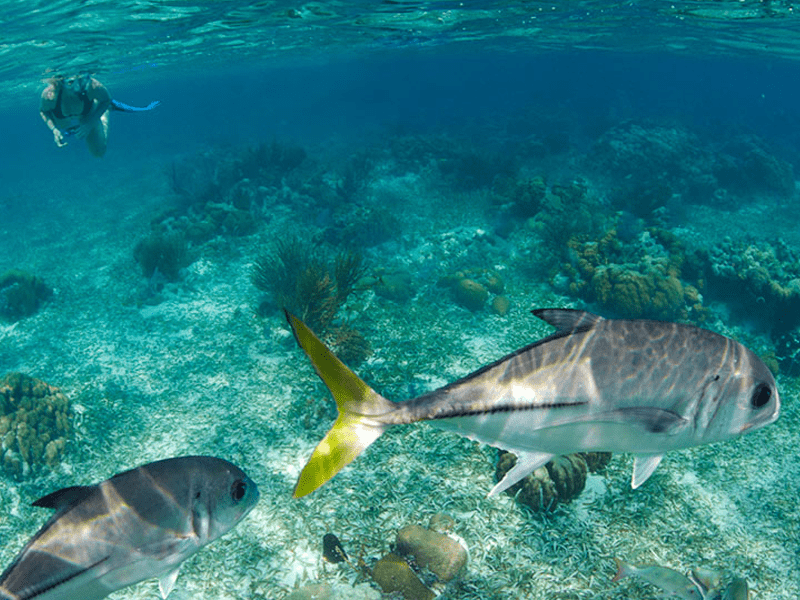 Belize - Snorkelling