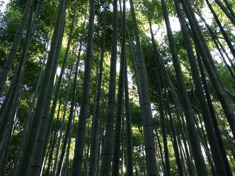 Tokyo, Kyoto And Osaka - Bamboo