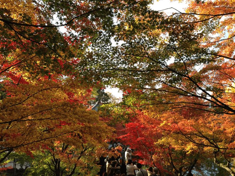 Japan - Leaves