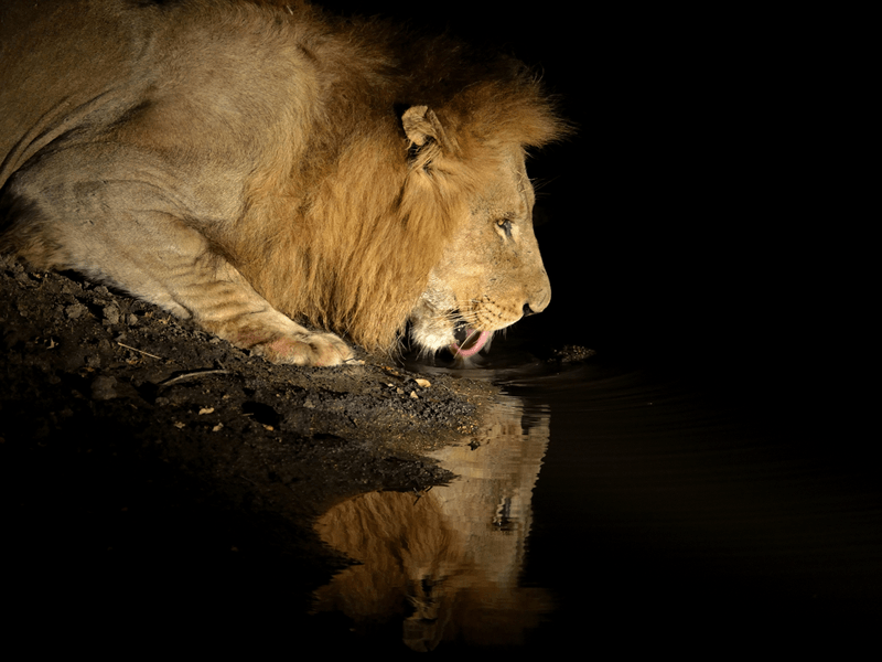 Africa At Night – Red Filter Spotlights