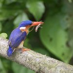 Sao Tome and Principe - Birding