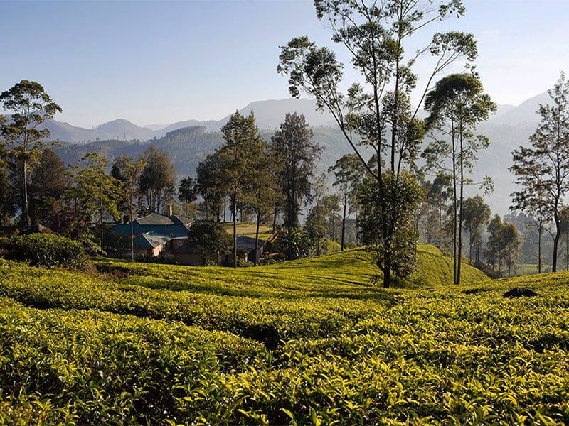 Top Hotels - Ceylon Tea Trails