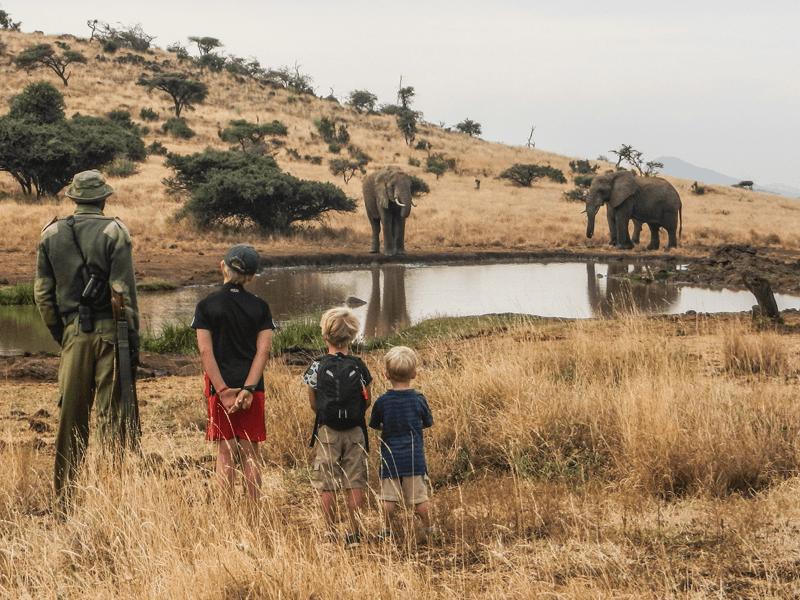 Lewa - Elephants