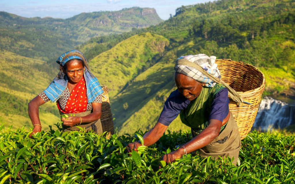 Celebrating Tea - Sri Lanka